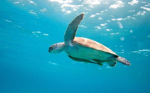 sea-turtle-1024x640