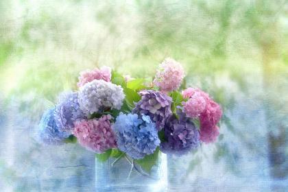 a-_beautiful_hydrangea-1555816